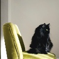 賃貸物件を「猫飼育可」にして差別化を図る前に考えること。